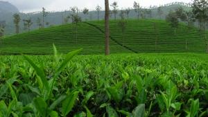 Pole herbaciane